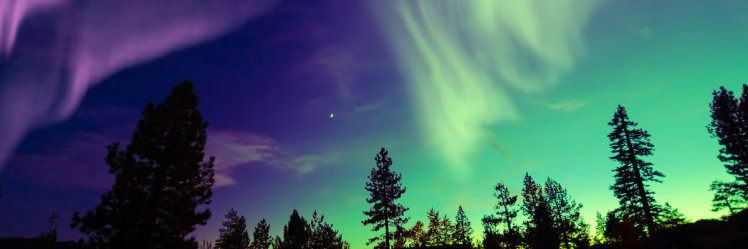 northern_lights_over_trees_canada_49056
